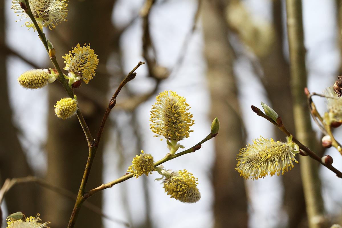 Baumlandschaft im beginnenden Frühling