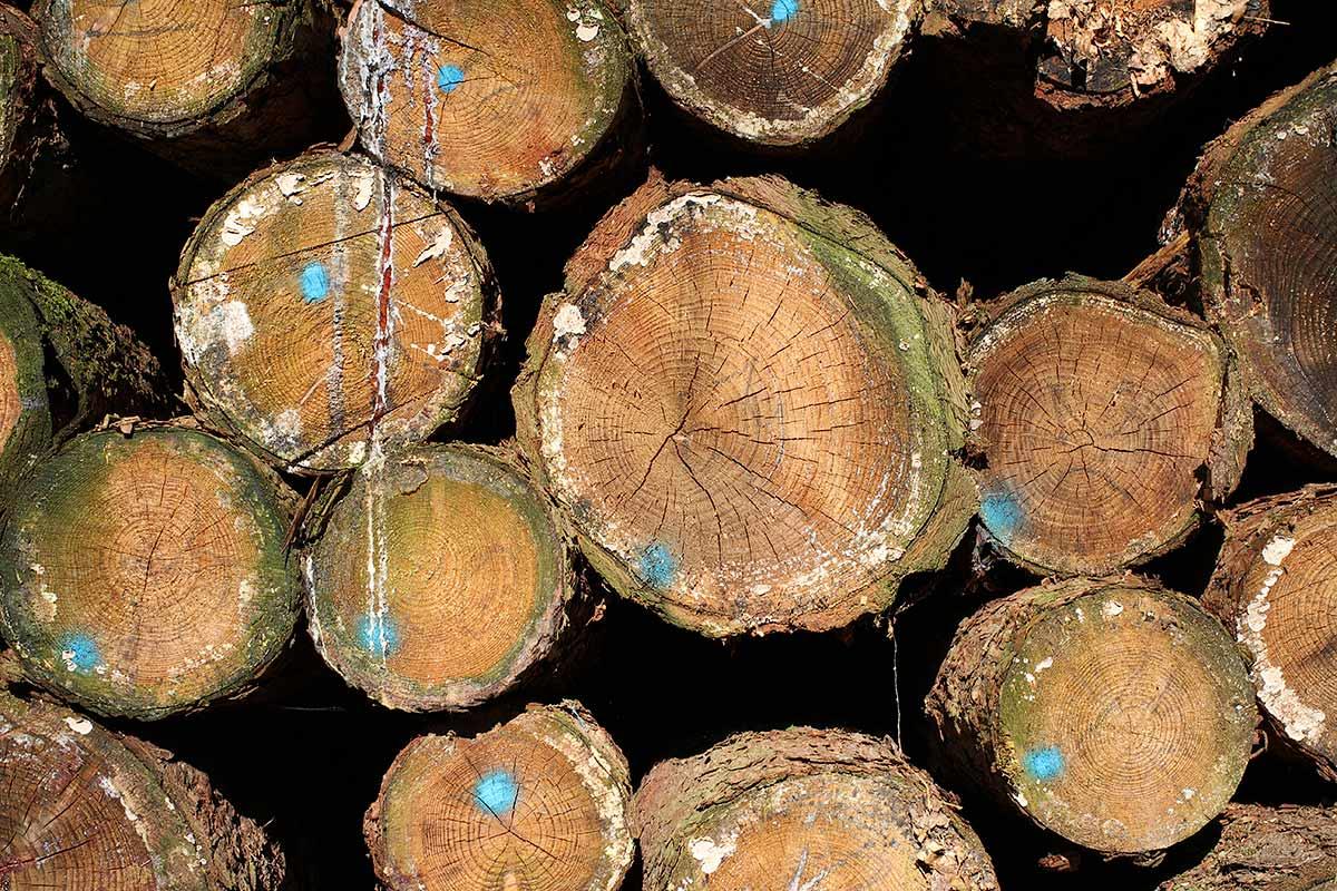 Brennholzlos
