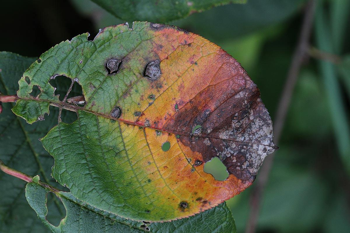 Erste Herbstzeichen 2017