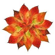Herbstblätterarrangement, aus: Herbstblätterblüte