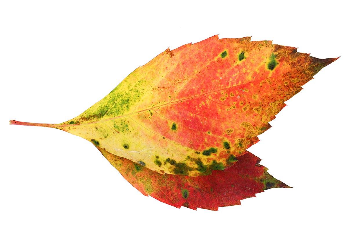 Herbstblattfarben I
