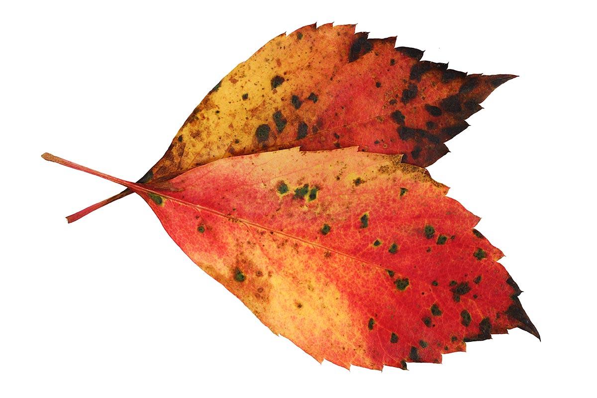 Herbstblattfarben III