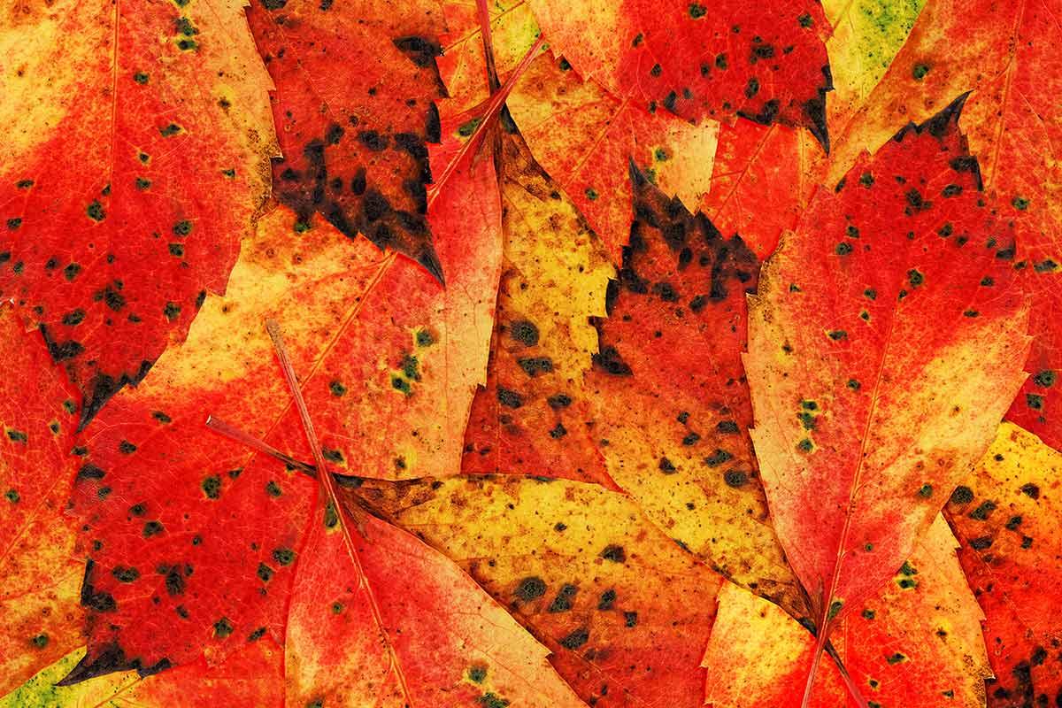 Herbstblätterkomposition