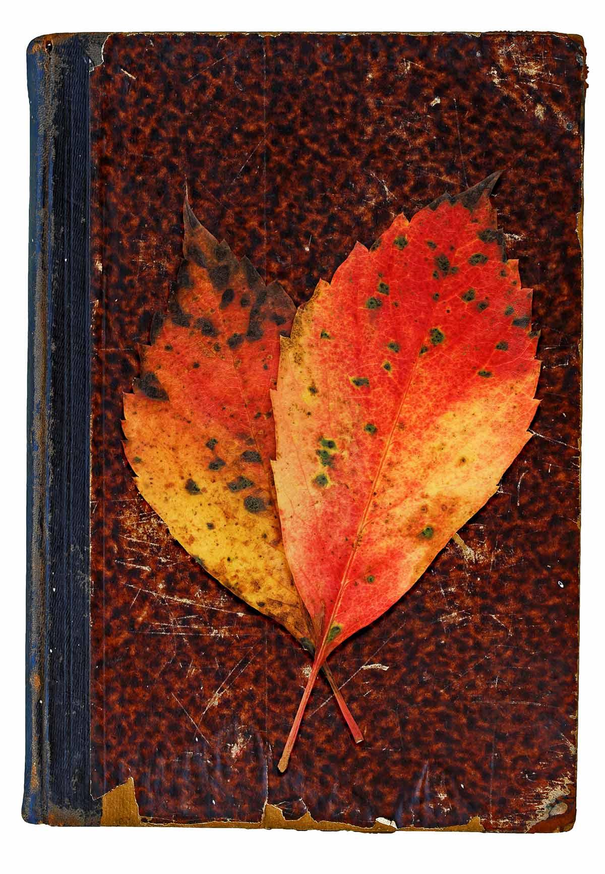 Herbstliches Konzept