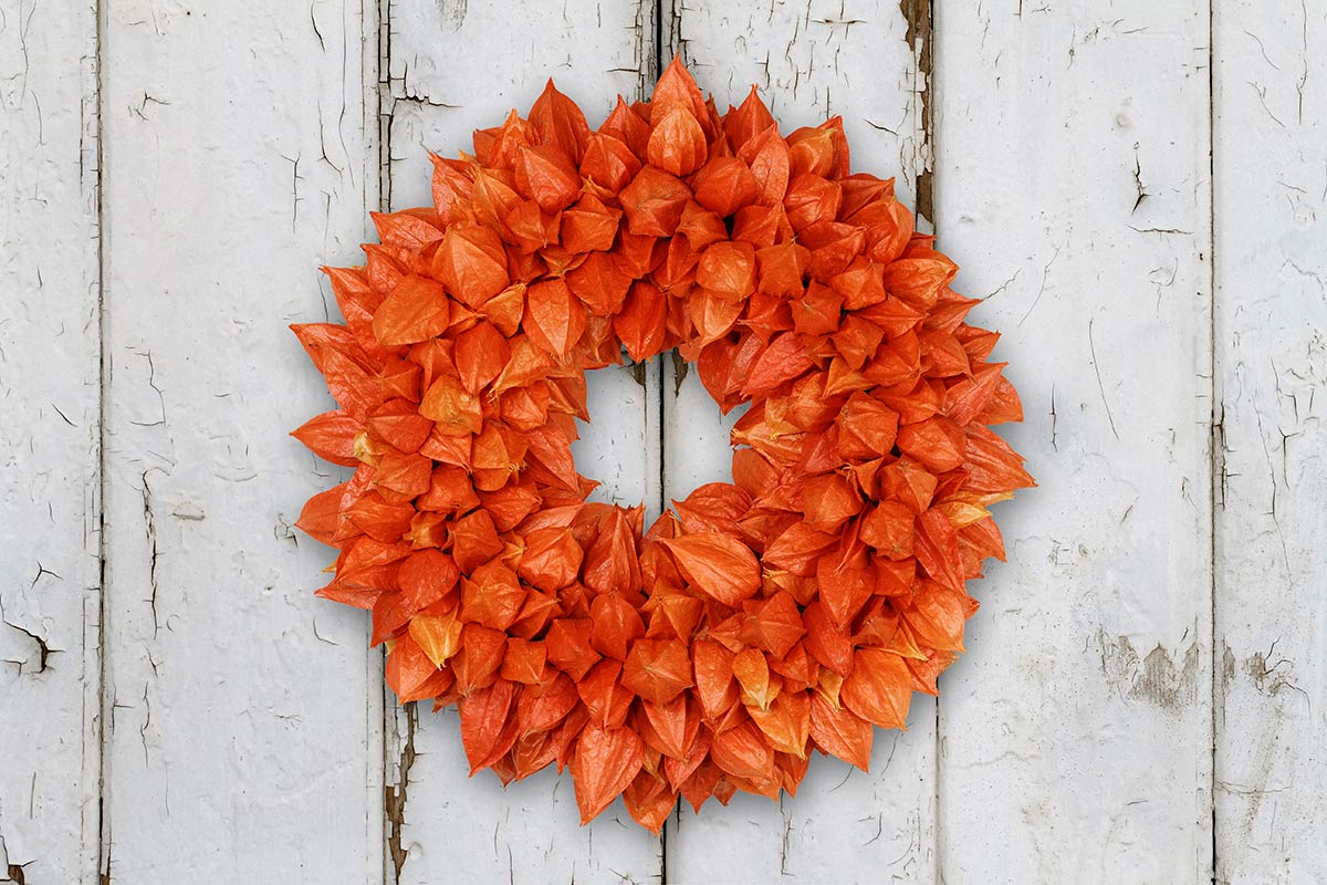Herbstkranz mit Physalis