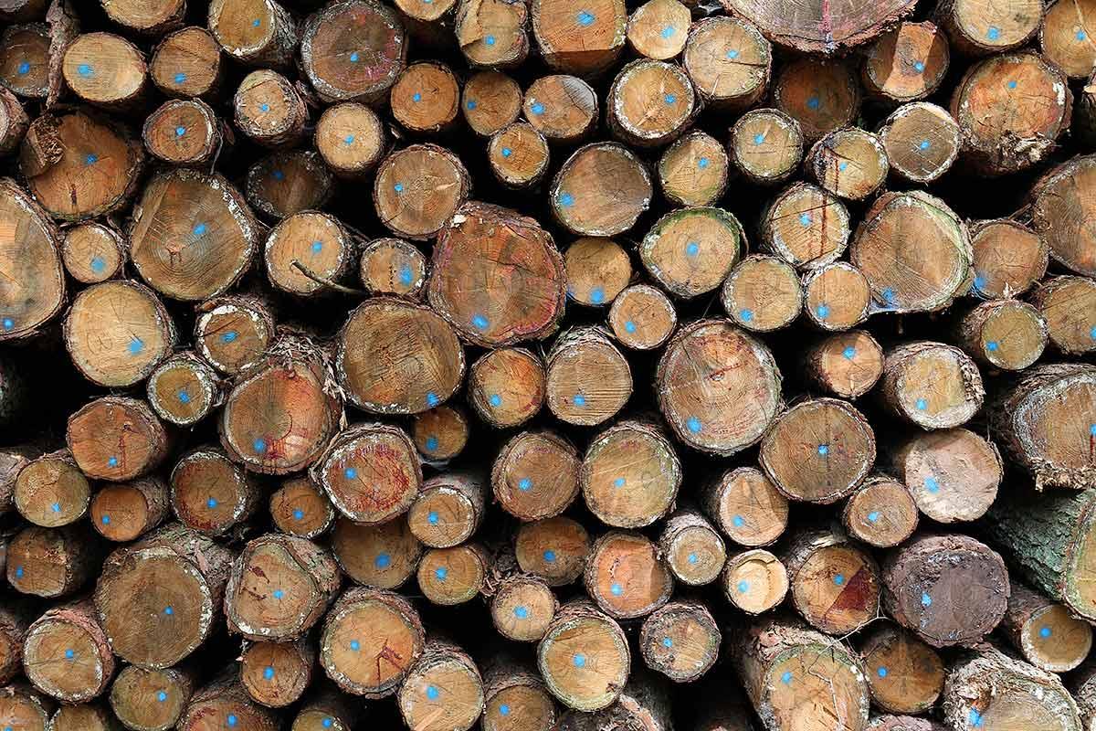 Aufgeschichtete Holzstämme am Waldrand