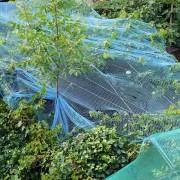 Schutznetze für Weinreben, aus: Vom Charme spätsommerlicher Nachmittage in der Landschaft
