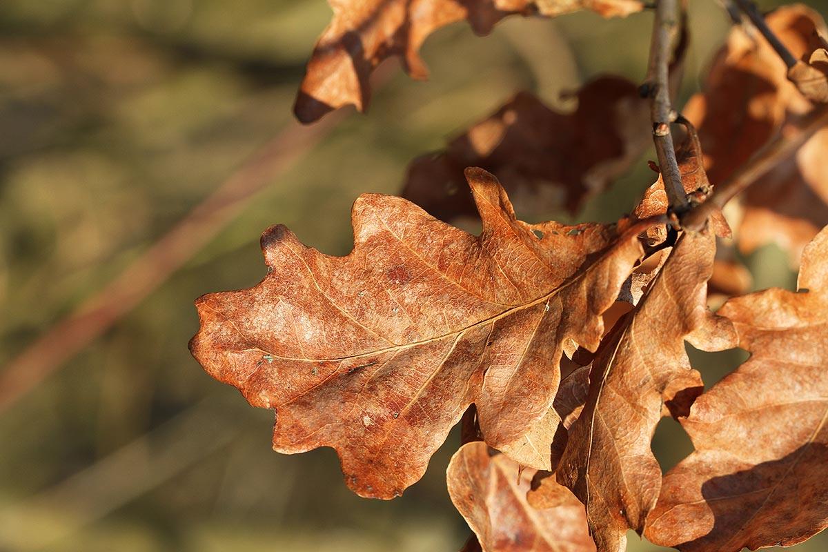 Baumimpressionen im Winter 2017